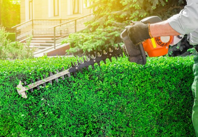 Best Gas Hedge Trimmer for Hedges of All Sizes: Detailed 2021 Buyer's Guide