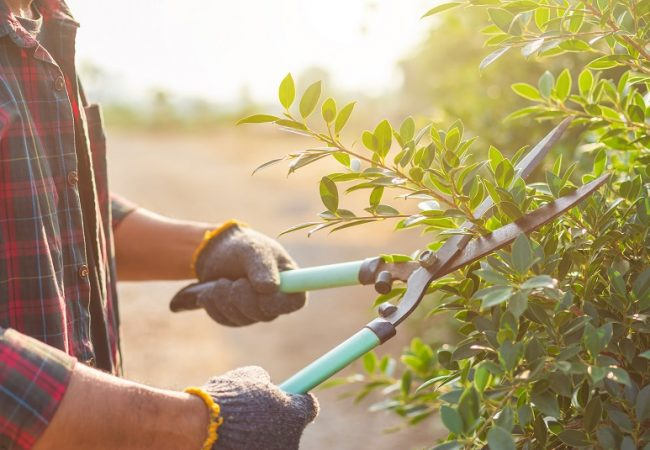 Best Hedge Shears for Topiary and Evergreen Shrubs: Buyer's Guide & Top Product Picks