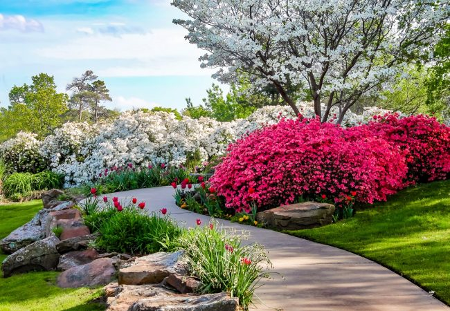 Beautiful Shrubs that Bloom All Year