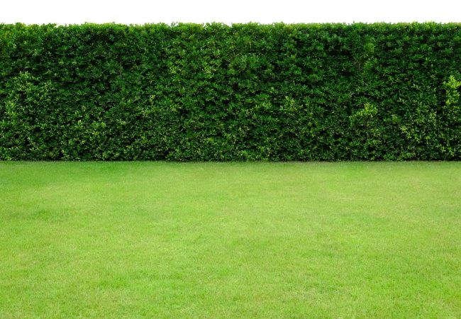 How to Plant a Hedge: Standard Hedges and the Living Fence