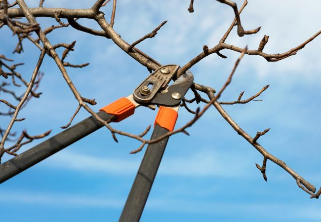 Best Loppers for Pruning: Complete 2021 Buyer's Guide and Leading Products