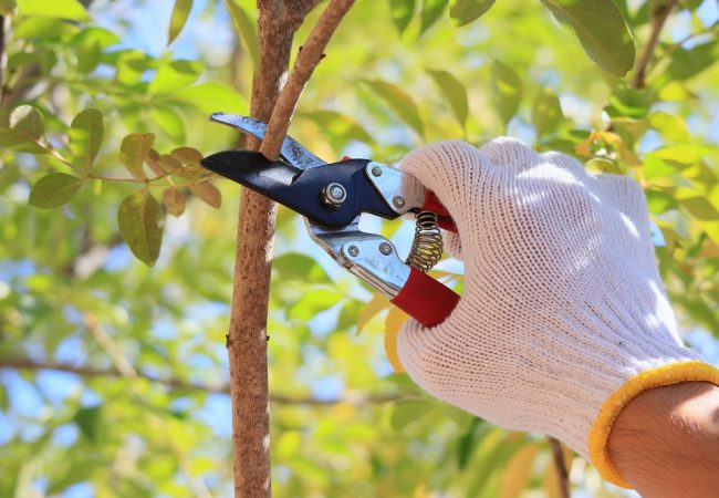 Best Pruning Shears: Top Products & 2021 Buyer's Guide