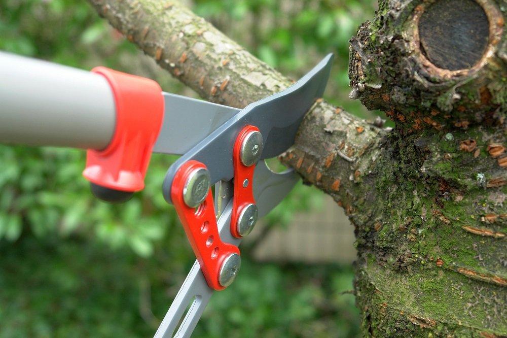 tools on a tree