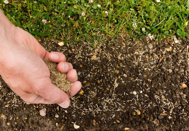 How To Plant Grass Seeds – Ultimate Beginner's Guide For A Perfect Lawn!