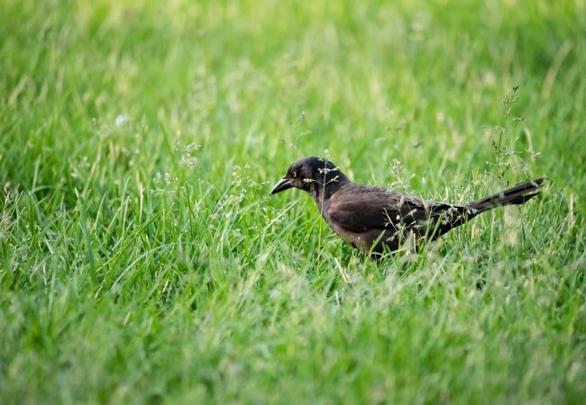 How To Keep Birds From Eating Your Grass Seeds – Epic Tips & Tricks!