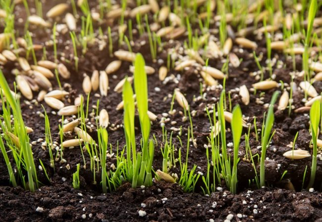 The Best Grass Seeds To Plant in 2021 – Ultimate Buyer's Guide & Top Products Reviewed!