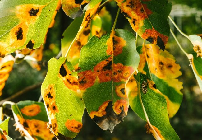 Plant Leaf Spot Diseases – Types, Causes, and Management