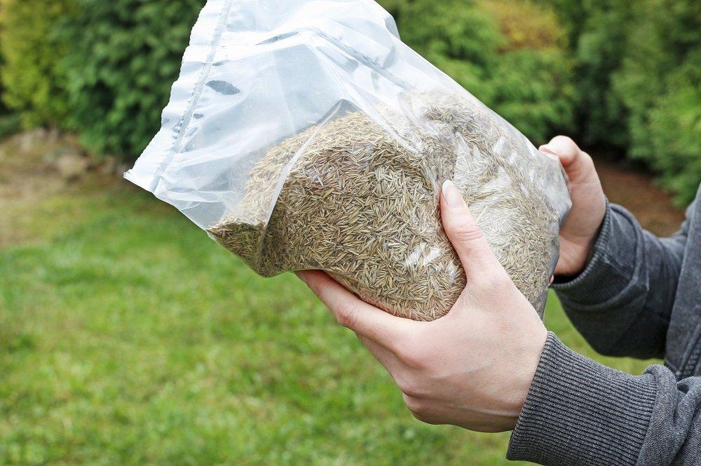 hand holding a bag of grass seeds
